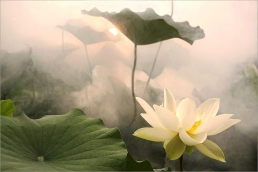 86817-exotic-flowers-lotus-flower