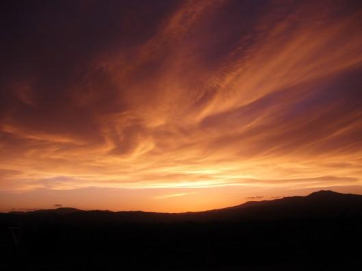 radiating blossom sunset